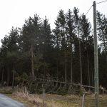 Tempête : Plusieurs arbres sont tombés (ici au Montet).