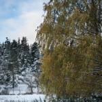 Contraste de couleurs sur le chemin entre Bessils et Aubigeyrettes, commune de Javols